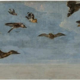 Un mochuelo y multitud de pájaros