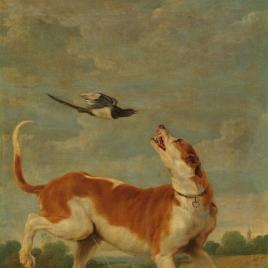 El perro y la picaza